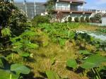 251100野島農園11月様子 (25)