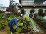 251100野島農園11月様子 (36)