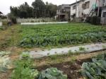 251100野島農園11月様子 (39)