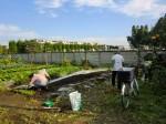 251100野島農園11月様子 (48)