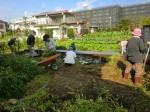 251100野島農園11月様子 (52)