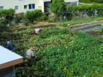 251100野島農園11月様子 (6)