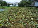 251100野島農園11月様子 (8)