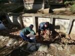 251200野島農園12月共同作業日 (16)