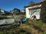 251200野島農園12月共同作業日 (4)