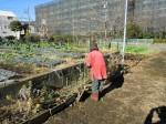 251200野島農園12月共同作業日 (8)