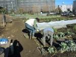251200野島農園12月様子 (14)