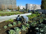 251200野島農園12月様子 (17)