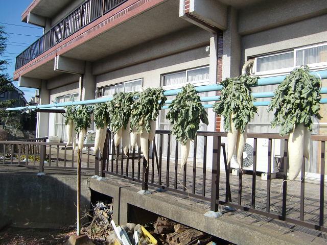251200野島農園12月様子 (6)