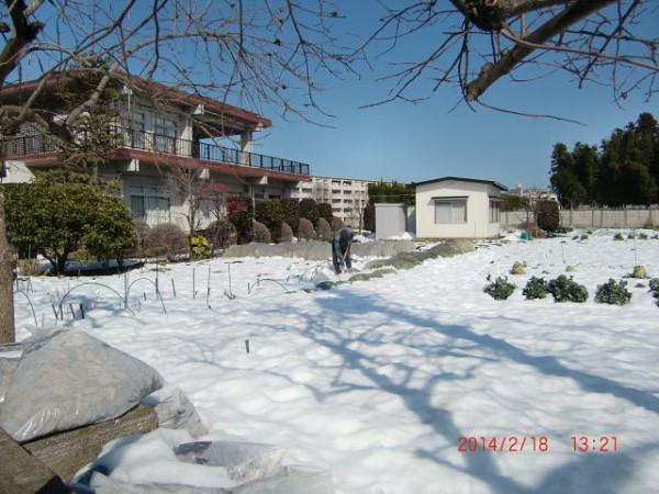 H260216 野島農園様子 (26)