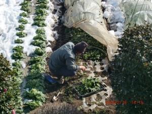 H260216 野島農園様子 (27)