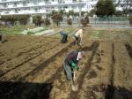 H250315親子農業体験ジャガイモ掘り用種植 (12)