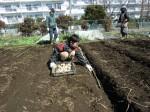 H250315親子農業体験ジャガイモ掘り用種植 (20)