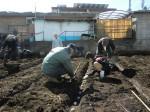 H250315親子農業体験ジャガイモ掘り用種植 (25)