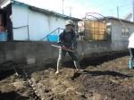 H250315親子農業体験ジャガイモ掘り用種植 (27)