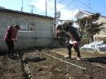 H250315親子農業体験ジャガイモ掘り用種植 (30)