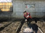 H250315親子農業体験ジャガイモ掘り用種植 (31)