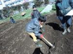 H250315親子農業体験ジャガイモ掘り用種植 (40)