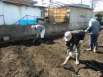 H250315親子農業体験ジャガイモ掘り用種植 (41)