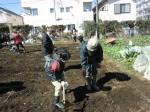H250315親子農業体験ジャガイモ掘り用種植 (42)