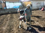 H250315親子農業体験ジャガイモ掘り用種植 (43)