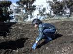 H250315親子農業体験ジャガイモ掘り用種植 (47)