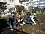 H250315親子農業体験ジャガイモ掘り用種植 (49)