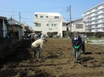 H250315親子農業体験ジャガイモ掘り用種植 (8)