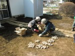 H250315親子農業体験ジャガイモ掘り用種植 (1)