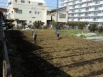H250315親子農業体験ジャガイモ掘り用種植 (13)