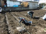 H250315親子農業体験ジャガイモ掘り用種植 (14)