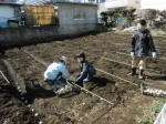 H250315親子農業体験ジャガイモ掘り用種植 (15)