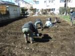 H250315親子農業体験ジャガイモ掘り用種植 (17)
