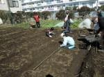 H250315親子農業体験ジャガイモ掘り用種植 (18)