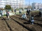 H250315親子農業体験ジャガイモ掘り用種植 (19)