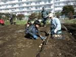 H250315親子農業体験ジャガイモ掘り用種植 (21)