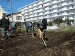 H250315親子農業体験ジャガイモ掘り用種植 (23)
