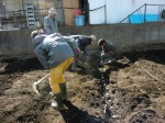 H250315親子農業体験ジャガイモ掘り用種植 (24)
