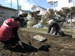 H250315親子農業体験ジャガイモ掘り用種植 (26)