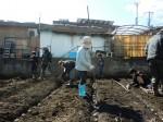 H250315親子農業体験ジャガイモ掘り用種植 (29)