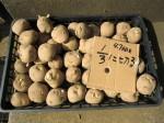 H250315親子農業体験ジャガイモ掘り用種植 (4)