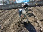 H250315親子農業体験ジャガイモ掘り用種植 (44)