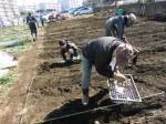 H250315親子農業体験ジャガイモ掘り用種植 (45)