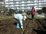H250315親子農業体験ジャガイモ掘り用種植 (46)