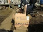 H250315親子農業体験ジャガイモ掘り用種植 (5)