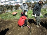 H250315親子農業体験ジャガイモ掘り用種植 (51)