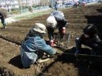 H250315親子農業体験ジャガイモ掘り用種植 (54)
