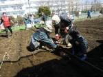 H250315親子農業体験ジャガイモ掘り用種植 (55)