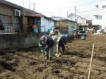 H250315親子農業体験ジャガイモ掘り用種植 (9)