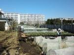 H260304野島農園 (8)